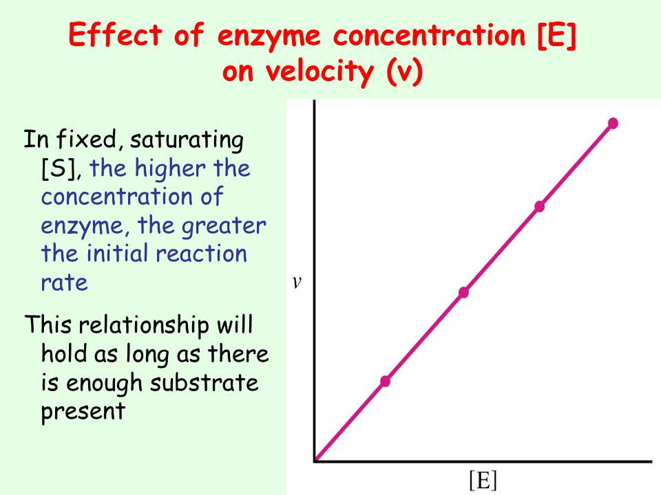 Effect of enzyme concentration [E] on velocity (v)